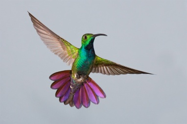 hummingbird-photography3